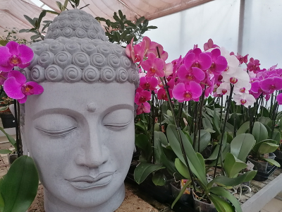 Virágzó orchideák, kaktuszok