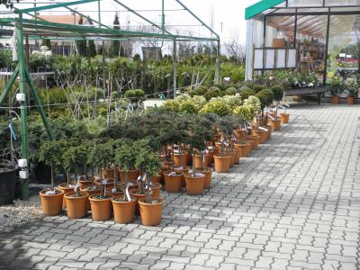 Alaknövények