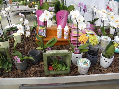 Orchidea kínálatunk